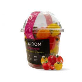 Bloom - Tomatoes Mix