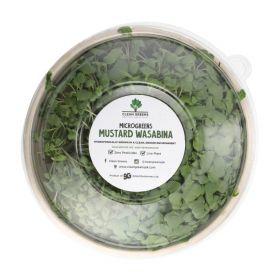 Clean Greens - Microgreen Mustard Wasabina